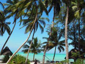 masai-palm-trees-pongwe