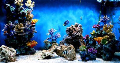 clownfish-tank-trip-advisor_orig