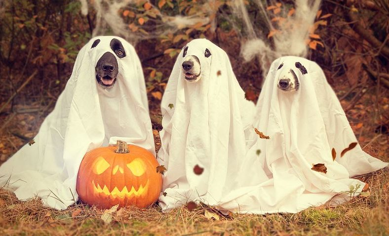 3 dogs in ghost costumes