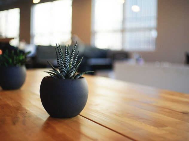 Feature Image, succulent on wooden table