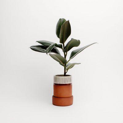 helen faulker_plant pot